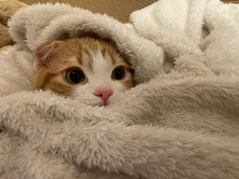 東京のペット可ホテル6選!ペットと楽しく泊まれるのはココ